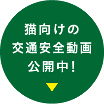 猫向けの交通安全動画公開中!